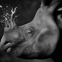 Rino. Un progetto di Illustrazione, Belle arti , e Pittura di Jaime Sanjuan Ocabo - 07.04.2016