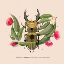 Coleoptera. Um projeto de Ilustração de Natalia Escaño - 17.09.2017