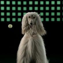 Medicus - Sporty Dogs. Un projet de Cinéma, vidéo et télévision , et Publicité de Javier Lourenço - 13.02.2018