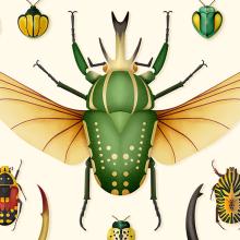 Coleoptera. Colección de ilustraciones de escarabajos. Un projet de Illustration, Design graphique, Illustration vectorielle et Illustration numérique de David Comerón - 17.10.2018