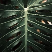 Nature. Un proyecto de Fotografía artística de Mariana Mariana - 04.08.2019