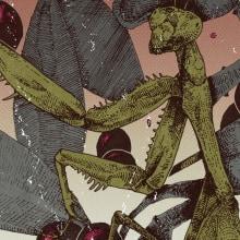 Belladonna. A Illustration, Grafikdesign, Zeichnung, Plakatdesign und Artistische Zeichnung project by Pedro Pérez Mendoza - 18.04.2020