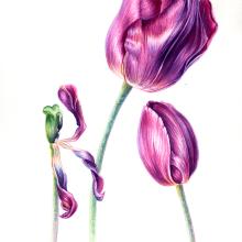 Etapa del Tulipán. Un proyecto de Pintura a la acuarela de Jose Andrés Ugalde Calderón - 27.04.2020