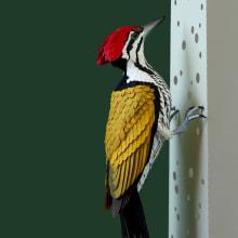 Common goldenback woodpecker . Um projeto de Design de personagens, Artes plásticas e Escultura de Diana Beltran Herrera - 02.05.2020