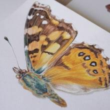 Libro Mariposas de la Reserva Biológica Huilo Huilo. Un proyecto de Ilustración de Antonia Reyes Montealegre - 02.11.2017