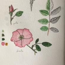 Mi Proyecto del curso: Cuaderno botánico en acuarela. A Botanical illustration project by Tomás Garnier - 06.23.2020