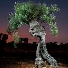 The Walking Trees. Un proyecto de Fotografía, Fotografía digital, Fotografía artística, Fotografía en exteriores y Fotografía documental de Alejandro Chaskielberg - 07.07.2020