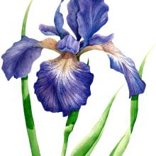 Aquarelas Florais. A Illustration, Watercolor Painting, and Botanical illustration project by Luli Reis - 12.12.2019