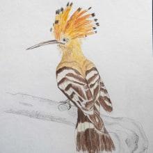 My project in Naturalist Bird Illustration with Watercolors course is Upupa epops . Un progetto di Disegno artistico di koutna.marianna - 02.09.2020