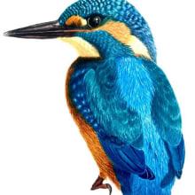 Mi Proyecto del curso: Ilustración naturalista de aves con acuarela. Un proyecto de Dibujo, Pintura a la acuarela e Ilustración botánica de Laura Carvajal - 10.09.2020