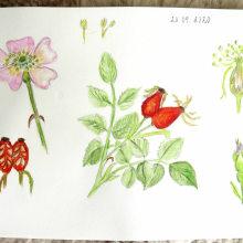 My project in Botanical Watercolor Sketchbook course. Un progetto di Disegno di koutna.marianna - 26.09.2020