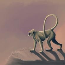 Semnopithecus Entellus My project in Naturalist Animal Illustration with Procreate course. Un proyecto de Ilustración de Valeria Carnevali - 25.10.2020