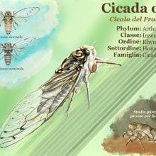 Cicada orni. Un proyecto de Ilustración de Valeria Carnevali - 03.11.2020