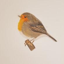 Mi Proyecto del curso: Ilustración naturalista de aves con acuarela. Un projet de Aquarelle de Ángeles González Martín - 13.11.2020