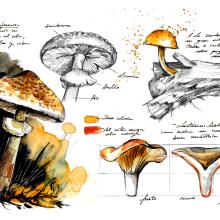Guía Repsol Setas Ilustres. A Illustration project by Alicia Aradilla - 11.28.2019