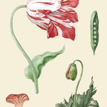 My project in Botanical Illustration with Watercolors course. Un proyecto de Pintura digital de michal.huniewicz.registered - 11.02.2021