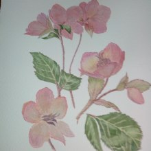 My project in Botanical Watercolor: Illustrate the Anatomy of Flowers course. A Accessor, and Design project by kingmadeline74 - 02.18.2021