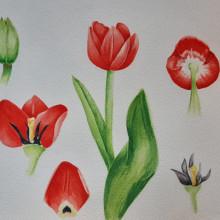 Mi Proyecto del curso: Ilustración botánica con acuarela. Un proyecto de Pintura a la acuarela e Ilustración botánica de Camila González Acevedo - 04.03.2021