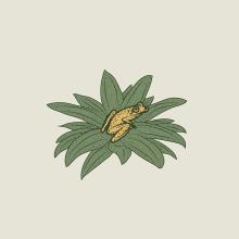 AMPHIBIA. Un proyecto de Ilustración, Br e ing e Identidad de Fabry Salgado - 07.02.2021