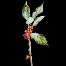 Mi Proyecto del curso: Ilustración botánica con acuarela. Un proyecto de Ilustración botánica de Jenifer Ortiz - 03.04.2021