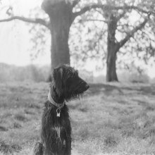 A dog's happiness. A Analog photograph project by Lola McCarthy - 04.08.2021