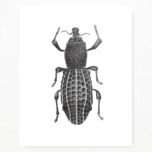Ilustración Naturalista. Un proyecto de Ilustración, Pintura a la acuarela e Ilustración naturalista de Javiera Videla - 26.11.2020