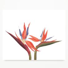 Papelería Botánica. Un proyecto de Pintura a la acuarela, Ilustración botánica e Ilustración naturalista de Javiera Videla - 05.01.2020