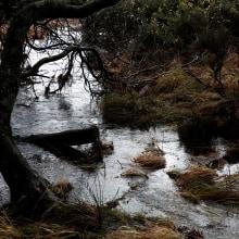 Landscapes 2. A Photograph project by Debbie Castro - 04.27.2021