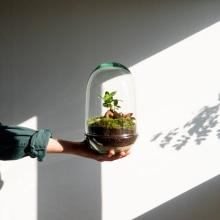 Elaboración de un Jardín en un bol. Um projeto de Artesanato de Omotesandō Plants - 17.05.2021