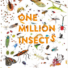 One Million Insects. A Writing project by Isabel Thomas - 06.08.2021