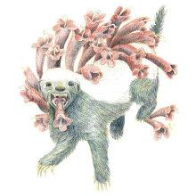 My honey badger project in Surrealist Illustration Inspired by Nature course. A Illustration, Bleistiftzeichnung, Zeichnung, Artistische Zeichnung und Naturgetreue Illustration project by Angela Boyle - 16.06.2021