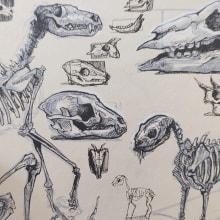 Bone Studies. A Illustration, Skizzenentwurf, Kreativität, Zeichnung und Sketchbook project by Andrada Aurora Hansen - 20.07.2021