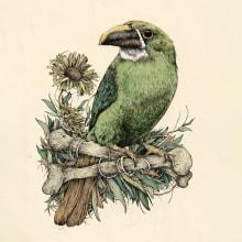 Ilustración naturalista con bolígrafo. Un proyecto de Ilustración, Dibujo, Dibujo realista e Ilustración naturalista de Ricardo Macía Lalinde - 09.08.2021
