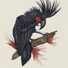 Probosciger aterrimus. A Illustration, Zeichnung, Realistische Zeichnung und Naturgetreue Illustration project by Ekaterina Gladkova - 18.08.2021