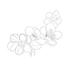Mi Proyecto del curso: Diseño de tatuajes botánicos con Procreate. A Illustration, Digital illustration, Tattoo Design, and Botanical illustration project by Pamela Maldonado - 09.21.2021