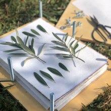 Mi Proyecto del curso: Técnicas básicas de prensado botánico. Un proyecto de Artesanía, Bellas Artes, Collage, DIY, Diseño floral y vegetal de Inés Arias López - 03.10.2021