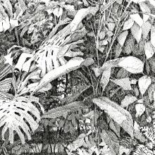 Expedición Botánica por el jardín de mi casa. Un proyecto de Ilustración, Bocetado, Dibujo, Ilustración digital, Dibujo artístico, Instagram, Ilustración botánica, Sketchbook, Ilustración con tinta e Ilustración naturalista de David Morales - 01.01.2020