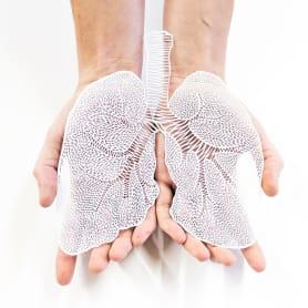 Los órganos vitales tallados en papel de Ali Harrison