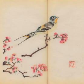 Explora el cuaderno impreso a color más antiguo del mundo