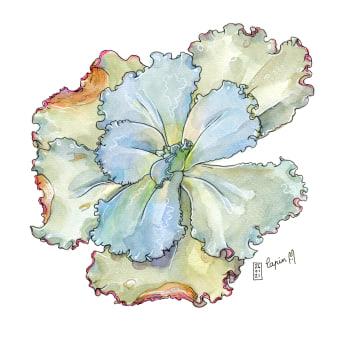 My project in Botanical Sketchbooking: A Meditative Approach course. Um projeto de Ilustração, Pintura em aquarela e Ilustração botânica de Lapin - 31.03.2021