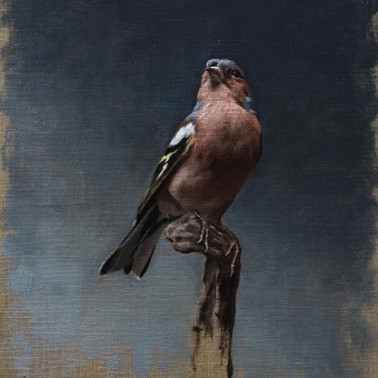 Portrait of a Chaffinch. A Fine Art, Painting, Oil painting, and Naturalist Illustration project by Sarah Margaret Gibson - 05.04.2021