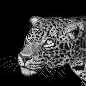Mi Proyecto del curso: Ilustración naturalista con scratchboard. Un projet de Illustration naturaliste de Julia Rouaux - 10.02.2021
