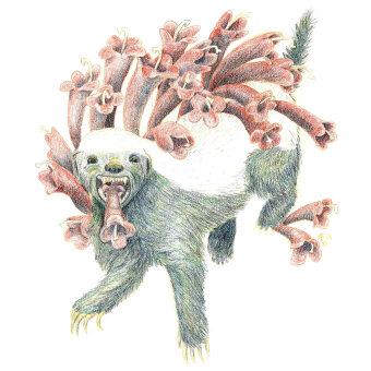My honey badger project in Surrealist Illustration Inspired by Nature course. Um projeto de Ilustração, Desenho a lápis, Desenho, Desenho artístico e Ilustração naturalista de Angela Boyle - 16.06.2021