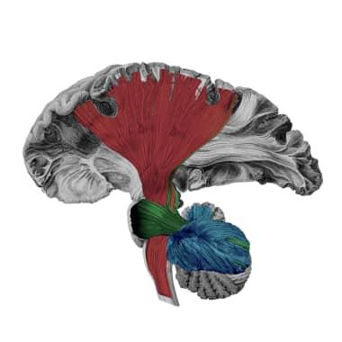 Art of Neuroscience Awards 2020
