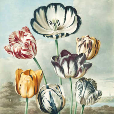 What Is Botany, and How Does It Inspire Creativity?