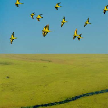 Discover the Brazilian Region of Pantanal, with Photographer João Farkas
