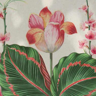 The History of Botanical Illustration