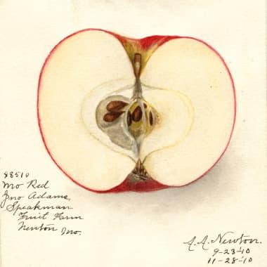 Descubra 7 mil aquarelas de frutas e vegetais grátis