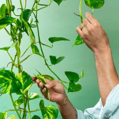 Tutorial Interiores: Cómo decorar una habitación con plantas