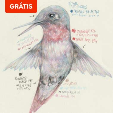 Download grátis: guia para desenhar um beija-flor